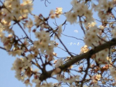 春しか見られない景色。
