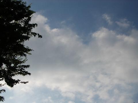 朝の空のような色。