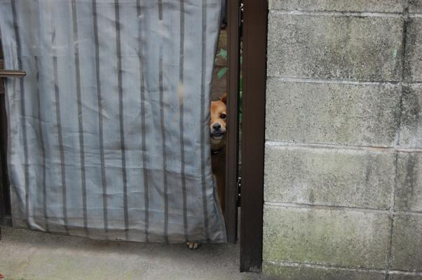 隙間から犬