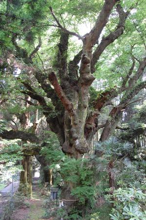 籾山神社1