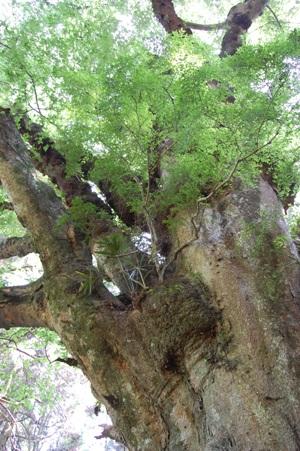籾山神社2