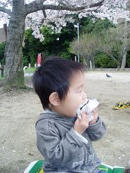 桜の下でお弁当~♪
