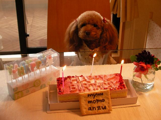 2008 2 2 マロン君家 078 myuuケーキと