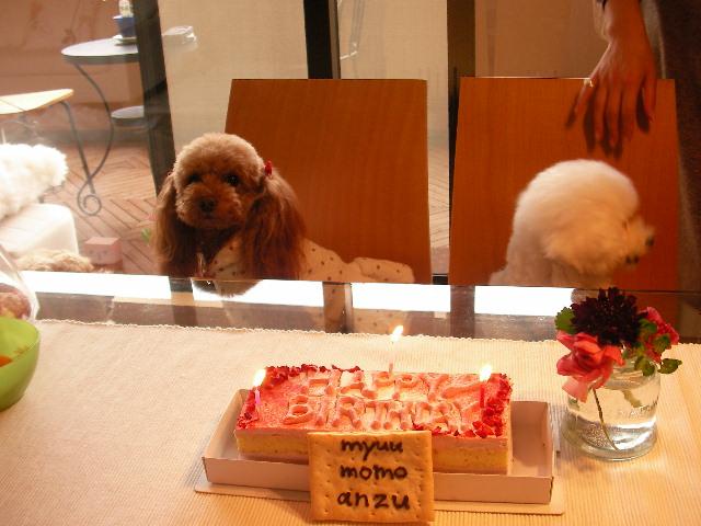 ケーキ前もも みゅう