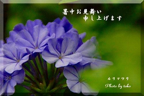 s-s-DSC_2786.jpg