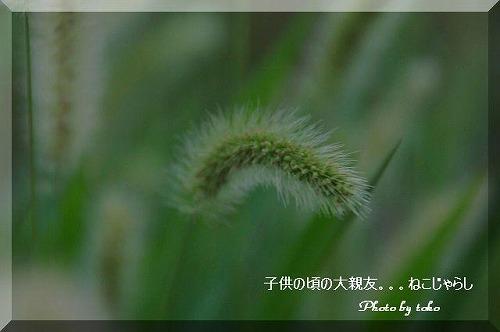 s-s-DSC_3302.jpg