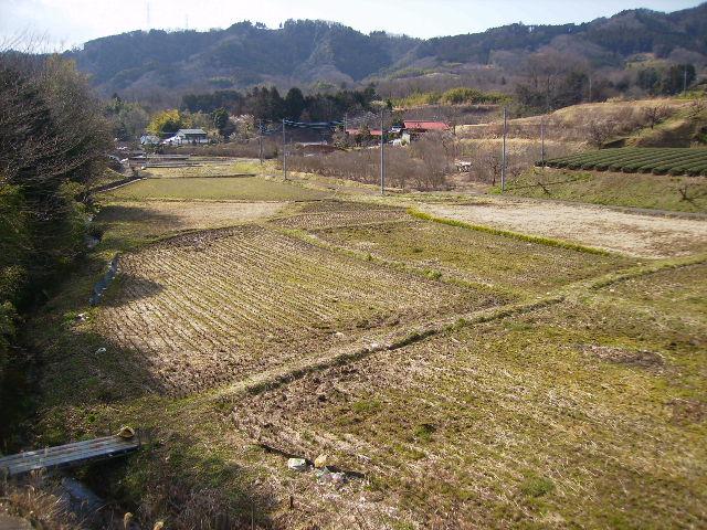 初春の田んぼ219