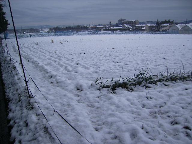 雪の畑16