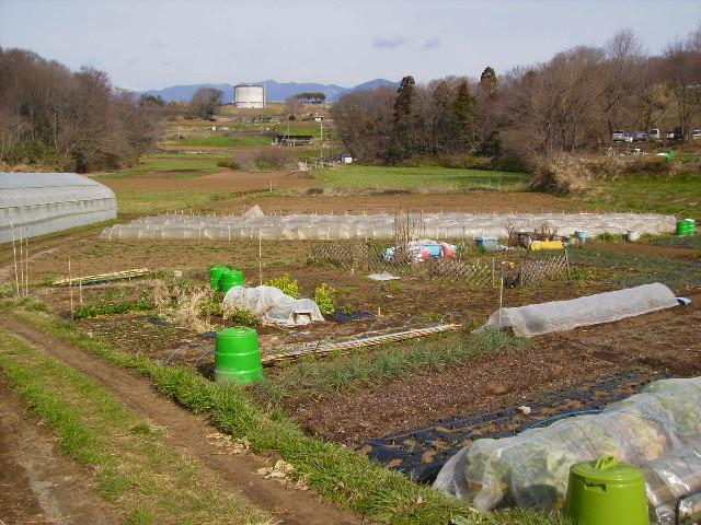 谷の畑31