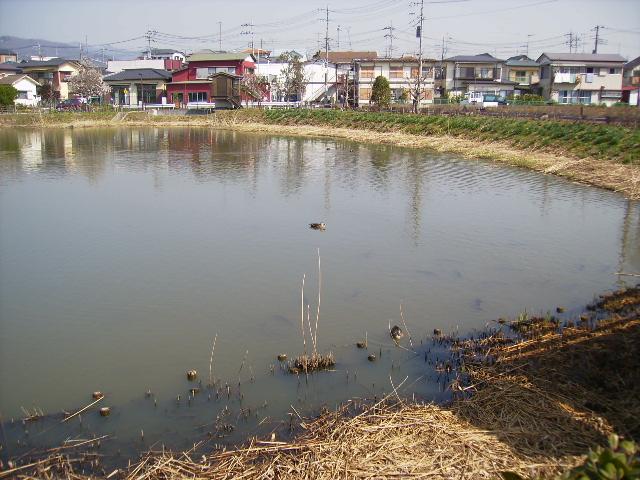 やすらぎの池24