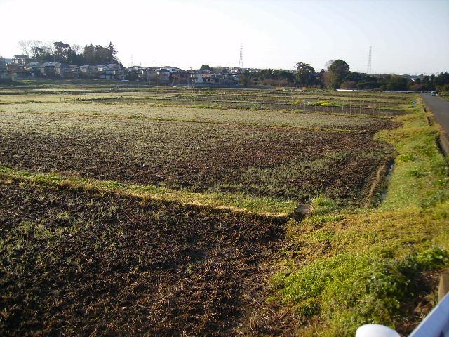 初春の田んぼ213