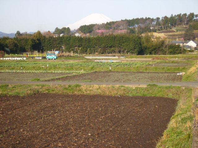初春の白富士224