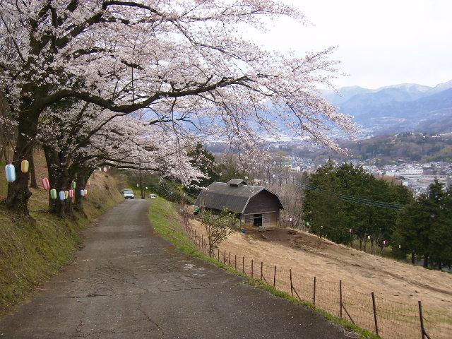 めんようの里の桜154