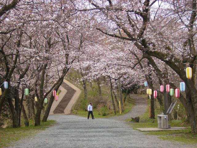 馬場道の桜169