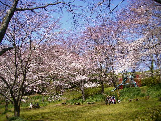 桜と休憩235