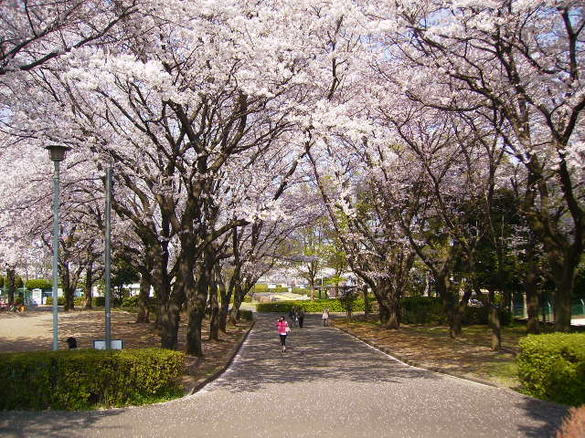 運動公園の桜90