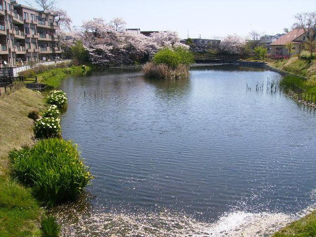 カラーと桜173