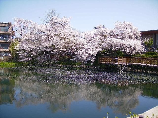 水面の桜177