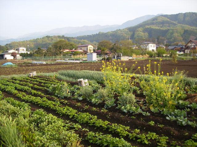 春の畑21