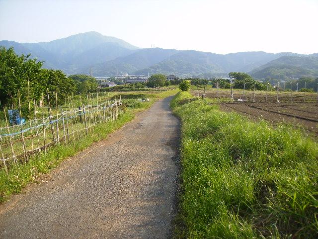 坂本古道41