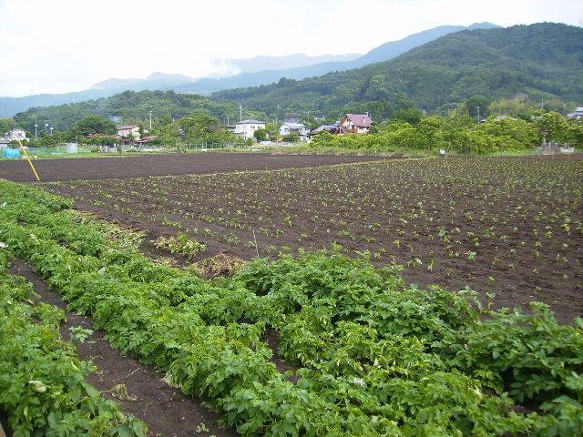 野菜畑14
