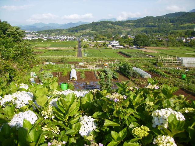 紫陽花と田原盆地47