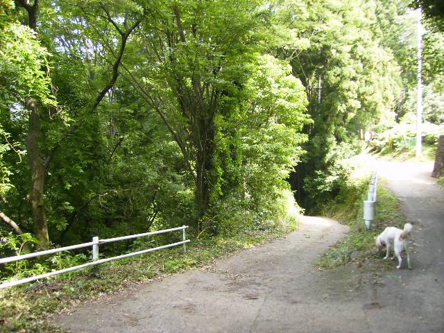 緑の山道80