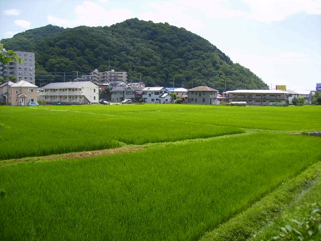 青田と権現山147