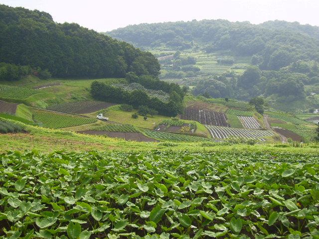 丘の畑71