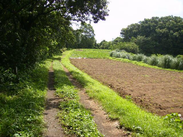 夏の農道53