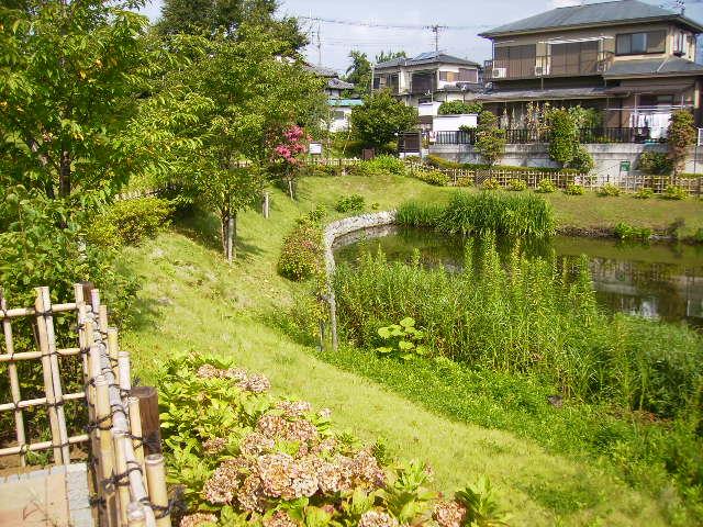 夏の池90