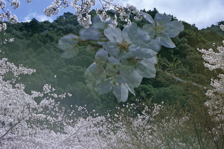 大寧寺(RDPⅢ)10