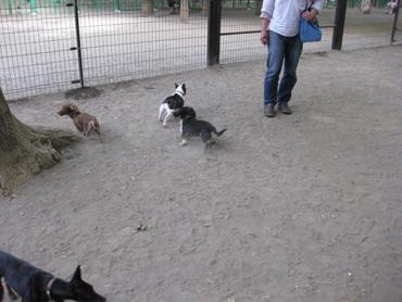 dogrun_20090506105648.jpg