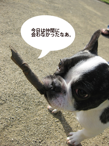 nakama_20090503122603.jpg
