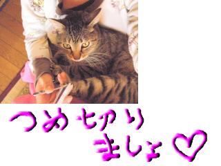 snap_topko_200933172519.jpg