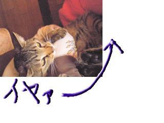 snap_topko_200933172732.jpg
