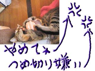 snap_topko_200933173029.jpg