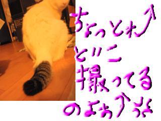snap_topko_20095525115.jpg