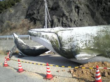 クジラ親子