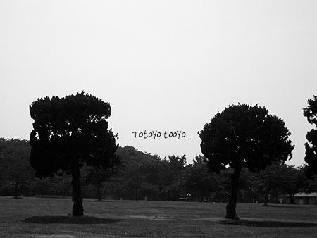 丸い木、四角い木