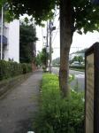 鎌倉街道のみどり(2)02