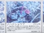 湿生植物園03