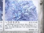 湿生植物園(2)04