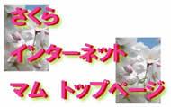 sakura-top2.jpg