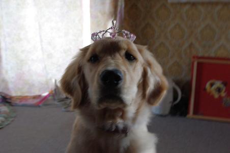 tiara1.jpg