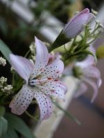 090717_flower.jpg