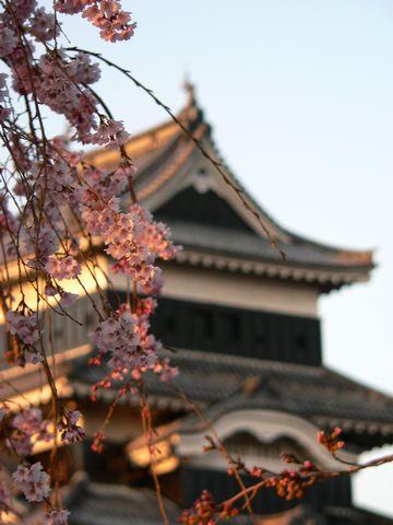夕焼けに染まる桜と松本城