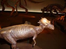 パキケファロザウルス