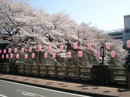 21.4.3静岡祭りの桜 01122