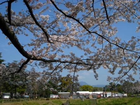 21.4.3静岡祭りの桜 06022